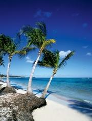 Oferta  Viaje de Última Hora a Punta Cana