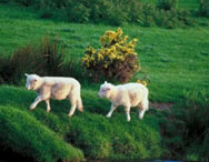 Oferta Circuito Irlanda