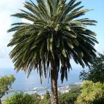 Porque Elegir las Islas Canarias